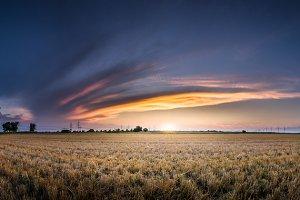Field sunset panorama