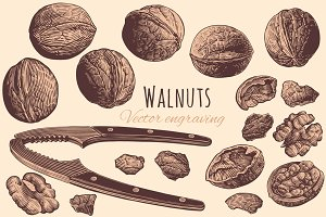 Set Walnuts. Vector engraving.