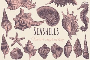 Set Seashells. Vector engraving.