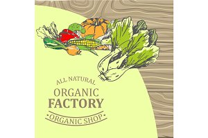 Organic Factory Shop with Only Natural Products