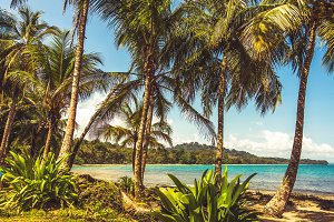 Tropical Caribbean Vintage Beach