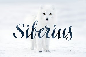 Siberius Clean Script Typeface