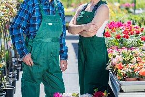 Senior gardener and middle-aged gardener at work.