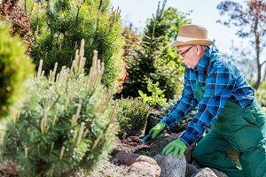 Senior gardener digging in a garden.