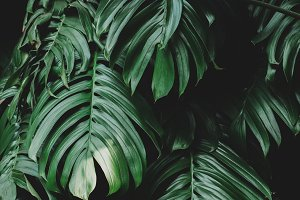 Lush green tropical jungle leaves