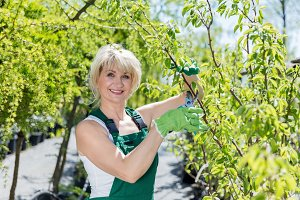 Mature woman gardener cutting a tree