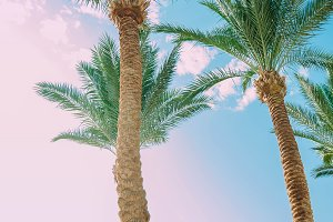 Palm trees on sky background