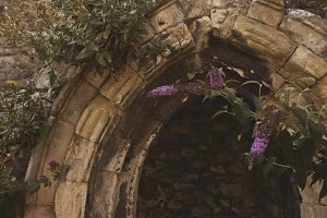 Flowers in Archway