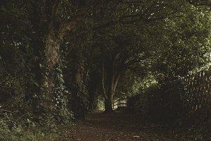 Tree On Path