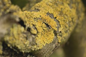 Yellow Bark on Tree