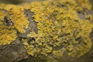 Yellow Tree Bark