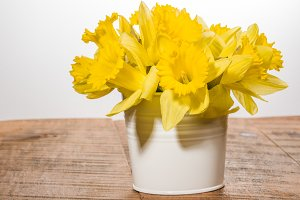 Yellow dafodills in white bucket
