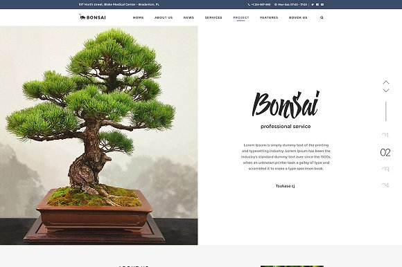 Bonsai - WP Landscapers & Gardeners