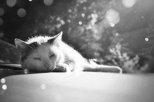 Cat´s nap