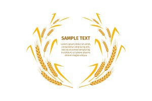 Wheat Ears around Your Text Sample on White