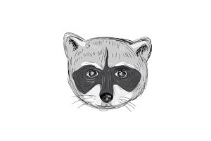 Raccoon Head Front Drawing