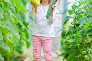 Adorable little girl harvesting in greenhouse. Portrait of kid with big cucumber and pepper in hands