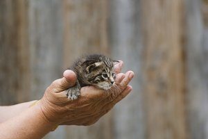 Newborn kitty cat in woman hand - rustic scene