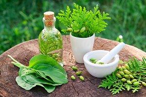 Thuja tincture, mortar, plantain