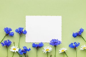 Frame of cornflowers and daisy