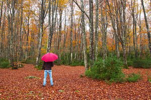 Man with an umbrella in fall forest