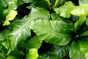 Green natural leaves