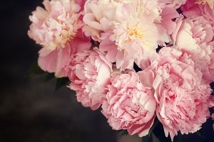 Pink peonies toned