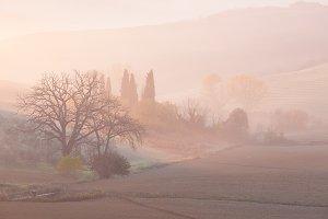 Tuscanian morning