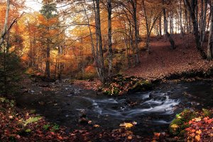 River in fall colors forest