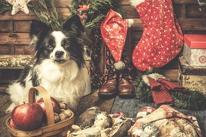 Cute pet Christmas cards