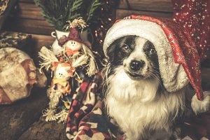 Dog Santa hat shabby style.