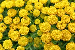 Wild flower texture.