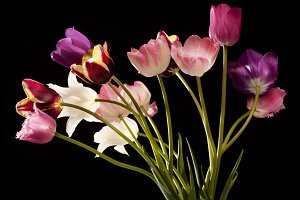 colourful tulip flowers in the vase