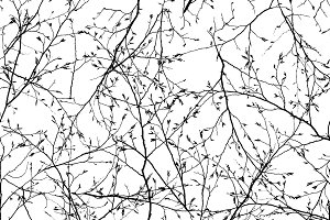 seamless texture of the branches