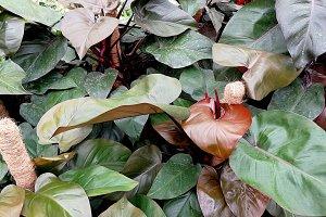 Dark beautiful plants