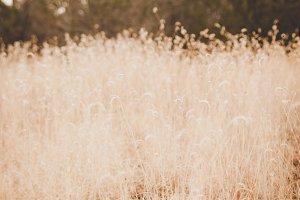 Closeup of Tall Grass