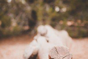 Closeup of Gnarled Log