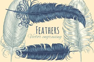 Set Feathers. Vector engraving