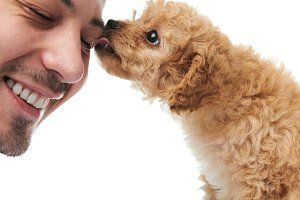Puppy licking man face