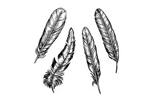 Feathers Set Hand Draw
