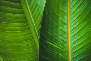 Tropical leaves texture