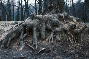 roots of old tree in darkness park