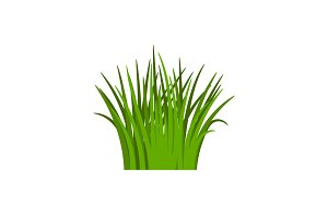 Light green grass isolated on white