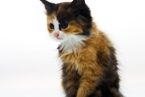 Furry kitten on white background isolated