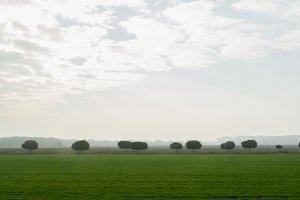 Green rural landscape - meadow at summer