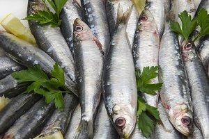 sardinas (16).jpg
