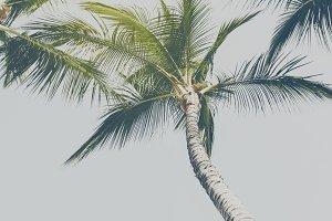 Range of palms toning blue top