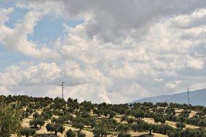 olivar en vertical.JPG