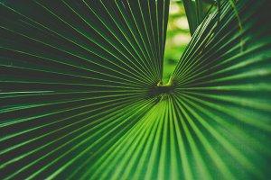 iseeyouphoto kew palm