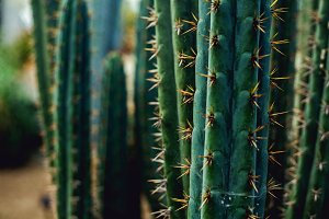 iseeyouphoto kew cacti 4